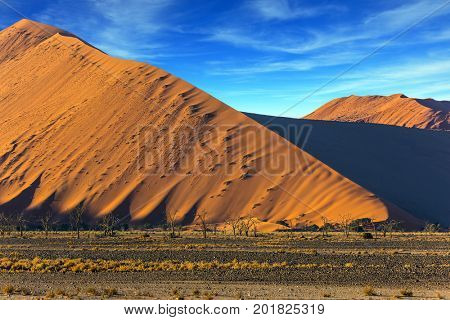 Whimsical forms of sand dunes created by the wind. Yellow dunes of the Namib desert. Namibia, South Africa. The concept of extreme and exotic tourism