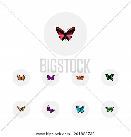 Realistic Monarch, Purple Monarch, Tiger Swallowtail And Other Vector Elements