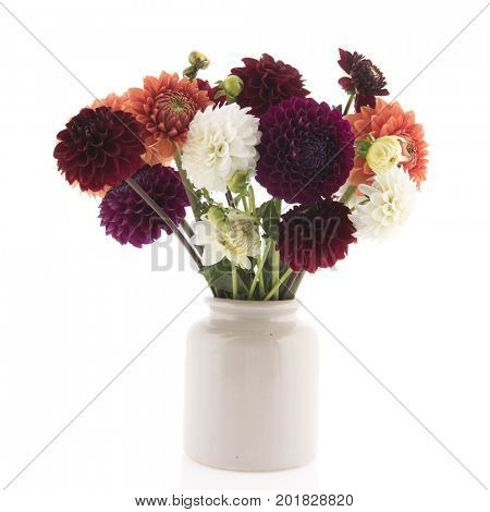 Bouquet colorful Dahlias in vase isolated over white background