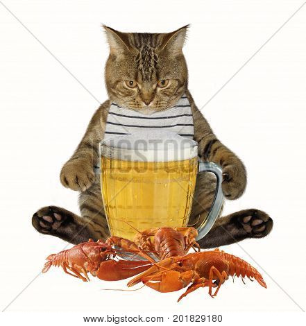 The cat is next to a big mug of beer and a boiled crayfish. White background.
