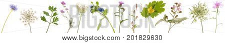 Banner with many wild flowers isolated over white background