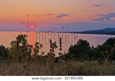 Sunset at sea with some mediterranean plants in foreground at Sithonia, Greece
