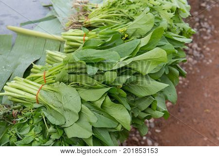 Chinese cabbage, Choy sum, a kind of chinese vegetable, Thailand market.