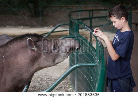 LES MATHES, FRANCE - JULY 4, 2016: Young visitor takes photos of the South American tapir (Tapirus terrestris), also known as the Brazilian tapir at La Palmyre Zoo (Zoo de La Palmyre), France.