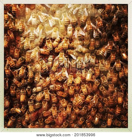 Swarm of bees in a hive - close up filtered image