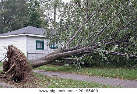 Wind Storm Damage