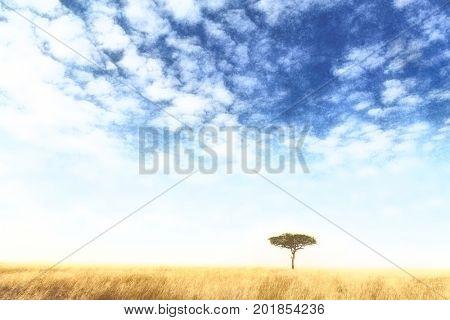 A digital watercolour of a lone acacia tree in the Masai Mara, Kenya.