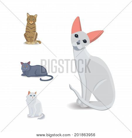 Collection Cats of Different Breeds. Vector isolated cat on white background. Home animal or pets. Fanny kittens faces.