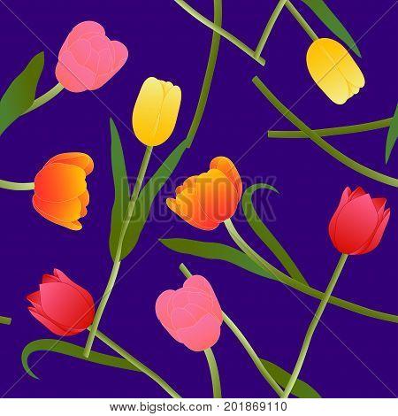 Colorful Tulip on Blue Violet Background. Vector Illustration.