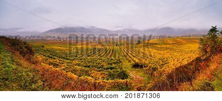 Panorama Of Wachau Valley. Colorful Autumn In Vine Yards