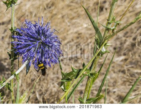 The Bee Sat Down On The Flower