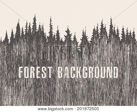 Pine forest vector illustration, hand drawn sketch