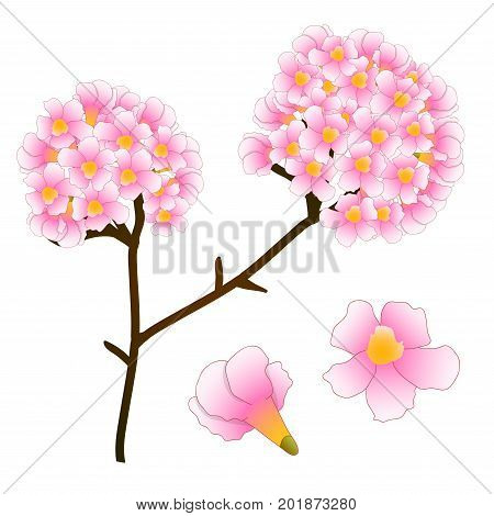 Pink Trumpet Flower Tree. isolated on White Background. Vector Illustration.