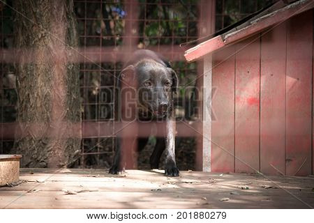 Lonely sad dog who will live forever behind a iron fence in dog's shelter