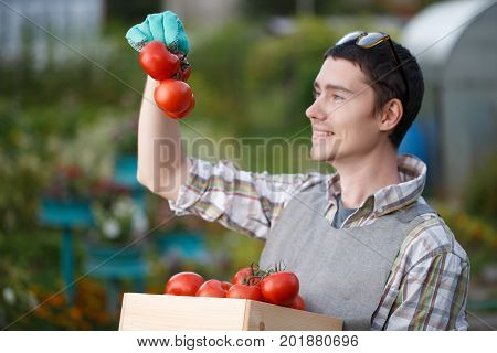 Photo of agronomist with tomato box in summer cottage