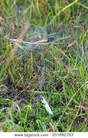 Cigarette Butt On The Grass