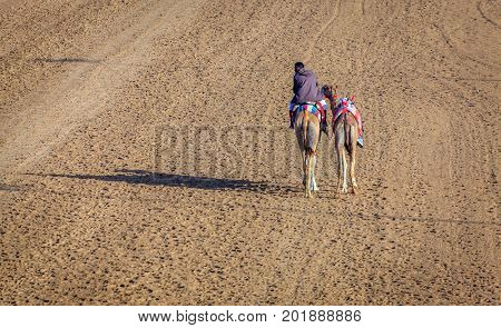 Dubai, United Arab Emirates - March 25, 2016: Camel handler  at Dubai Race Track, UAE