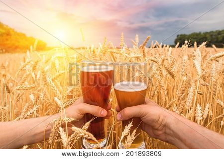 A glass of beer in the hands against ears of ripe wheat and wheat field