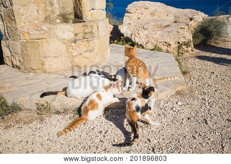 Cats in Cyprus in summertime. Homeless animals concept.