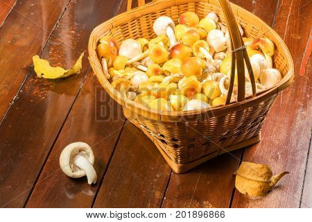 Amanita sp. mushroom in a bamboo basket on a wooden floor