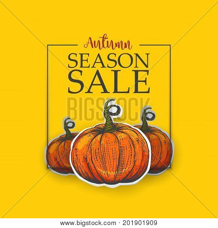 Yellow Poster for season sale. Autumn sale poster with the decor of paper cut pumpkins. The fall sale with sketches. Engraving retro vector illustration.