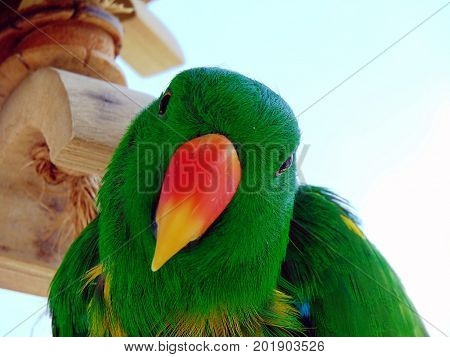 sweet green parakeet with tilted head orange yellow beak