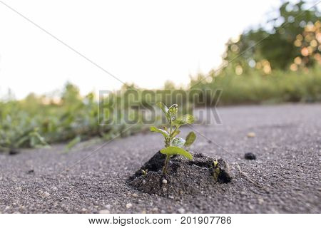 A small sprout breaks through a layer of asphalt