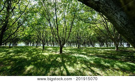 An old orchard full of waning trees in the French landscape with beautiful shady sunlight