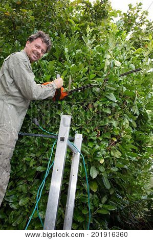 Man Trimming Bushes In Her Backyard Using An Electrical Hedge Trimmer