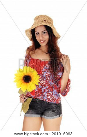 A closeup image of a beautiful young woman in shorts and a colorful blouse holding a yellow sunflower isolated for white background