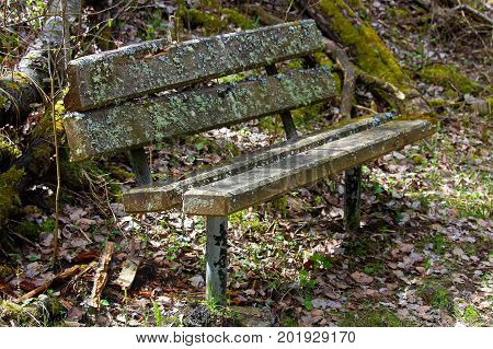 A Lichen Covered Bench In The Woods