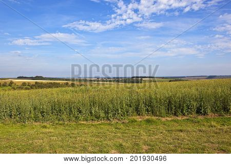 Scenic Landscape With Pheasant Cover