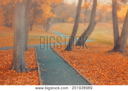 Autumn landscape. Autumn park alley in the fog with bare autumn trees and orange fallen autumn leaves. Foggy autumn alley in the deserted autumn park. Park autumn landscape scene