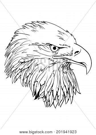 Eagle head logo Template Hawk mascot graphic Portrait of a bald eagle. Vector