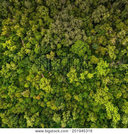 Beautiful juicy green pattern from the tops of deciduous trees. View from above. Aerial view. A picture resembling moss in the forest.