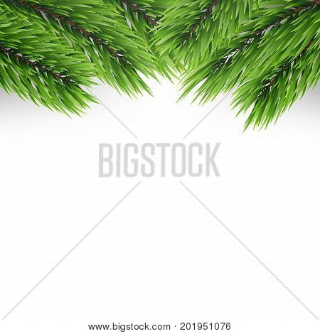 Christmas tree branches background. Fir branches isolated on white.