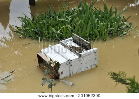 The consequences of flooding flooded destroyed bee hive