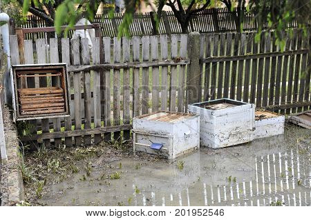 The consequences of flooding flooded destroyed bee hives