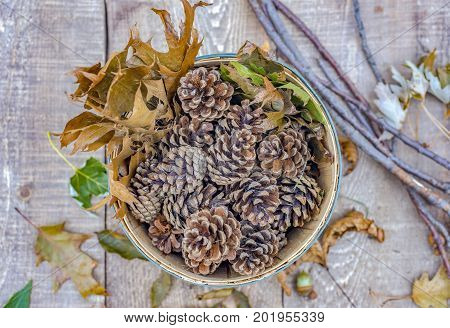 Bushel Full Of Autumn Pinecones And Oak Leaves Seen From Above