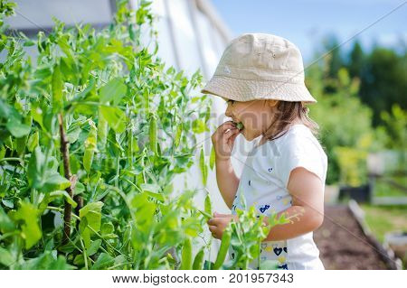 The child belches and eats peas in the garden