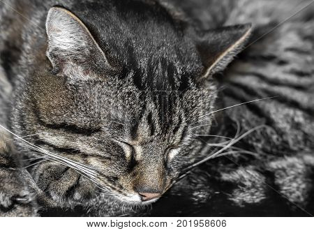 Stripped sleeping cat gray fur texture background