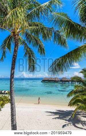 Tahiti beach vacation woman at luxury resort. French Polynesia travel destination tourist relaxing at turquoise pristine water in ocean paradise with palm trees background.
