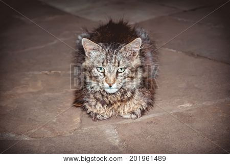 Stripped brown cat laying on the floor scene