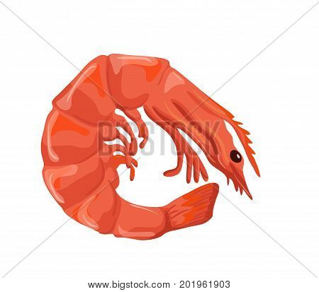 Shrimp vector icon isolated, hand drawn sketch of prawn, template for seafood menu, healhty diet infographics, sticker, flyer, package