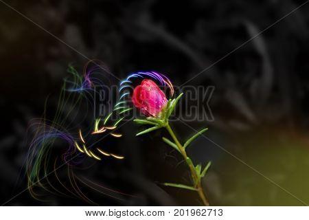Beautiful small red flower in green field