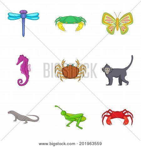 Grasshopper icons set. Cartoon set of 9 grasshopper vector icons for web isolated on white background