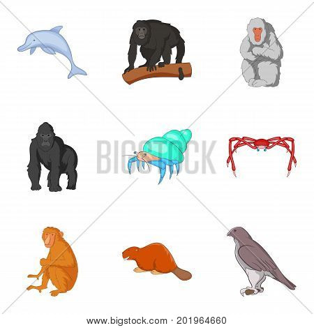 Ape icons set. Cartoon set of 9 ape vector icons for web isolated on white background