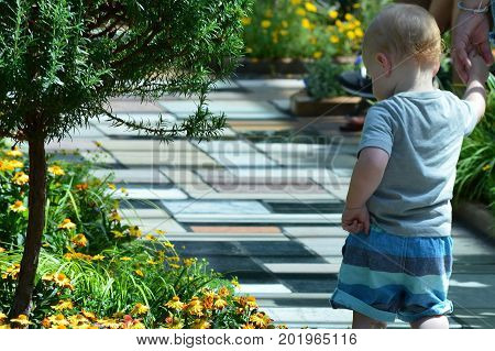 SAINT PAUL, MINNESOTA- AUGUST 2017:  A young boy looking at the flowers at Como Zoo and Conservatory in St. Paul, MN.