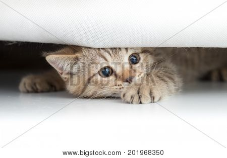 Funny cat looking from under small hole isolated on white