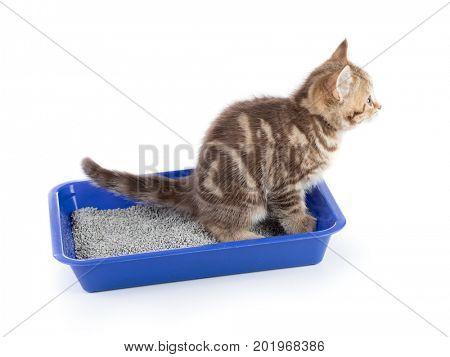 Funny cat pipi in toilet tray box isolated